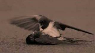 Bird crying over a dead friend