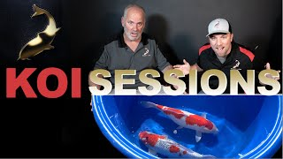 Koi Harvest Time!     KOI SESSIONS October 2020