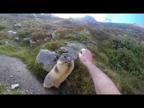 Saas Fee - Les Marmottes