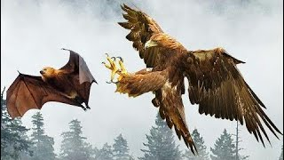 [Best Animal Fights]  Most Spectacular RAPTORS ATTACK COMPILATION including Eagles, Falcons, Snakes