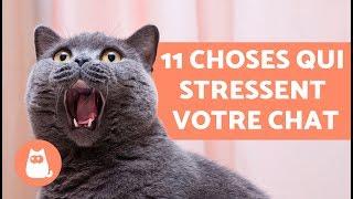 11 choses qui stressent votre chat