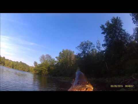 Kayak Fishing (Turkey Swamp, NJ) Strike King Coffee Scent Senkos