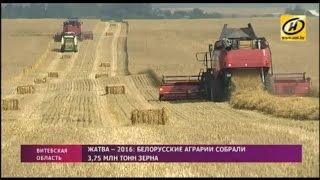 Гусеничный комбайн Гомсельмаш на жатве в Беларуси