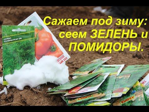 Сажаем под зиму: сеем зелень и помидоры.| Winter Sowing: salad, dill, tomatoes.