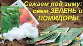 Посадка лука под зиму. Сорта моркови, свеклы под зиму.(18.10.16 .
