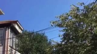 Laguardia airplanes noise killing people