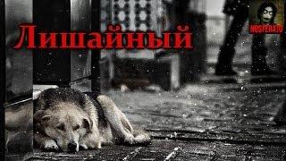 Истории на ночь - Лишайный