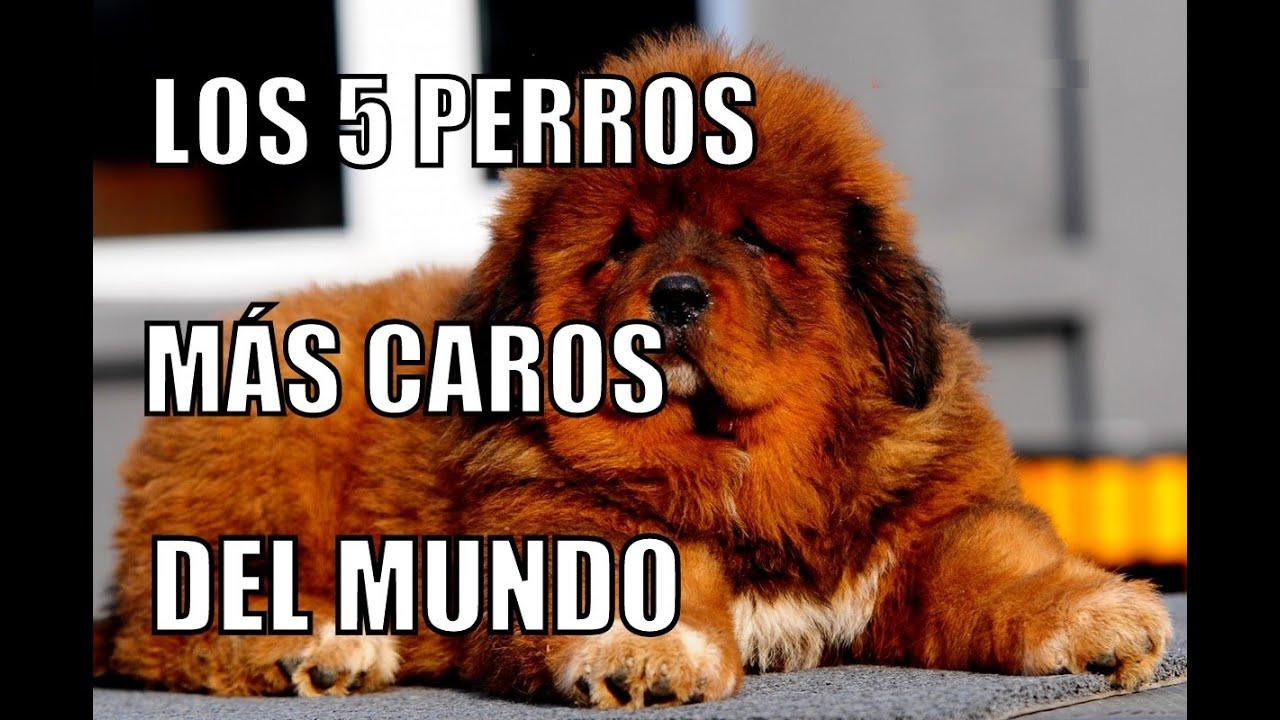 Del Perro El Mundo Mas Caro