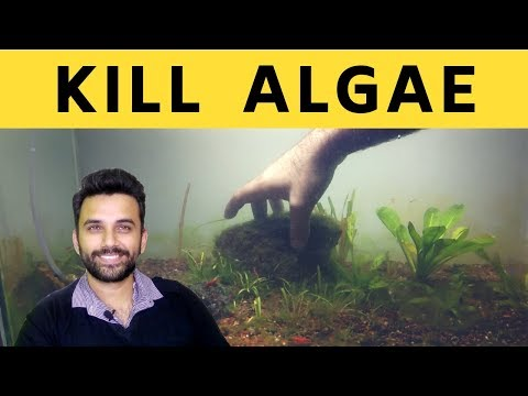 How To Remove Algae From Fish Tank