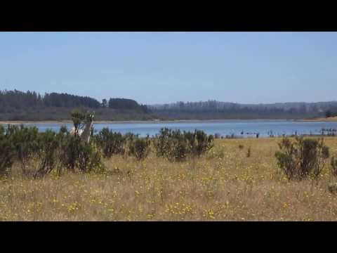 Visit from a vicuña - Lago Peñuelas National Reserve, Chile [HD video]