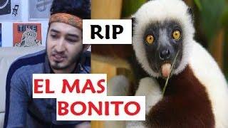 muere el lemur zoboo de zoboomafoo se lo comi un tigre