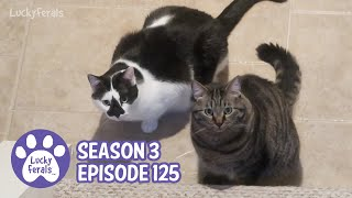 Stella Is So Smart, A New First For Hydrox, The Last Dragonfly Wings - S3 E125 Cat Vlog