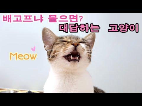 (현웃주의) 말걸면 대답하는 고양이 나나 Kittens Meowing