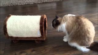 funny cat videos try not to laugh or grin funny cats compilation of the most funny animals