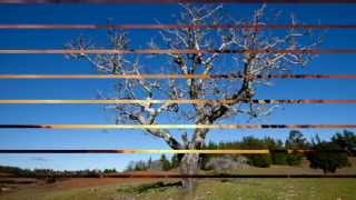 Amaya Hnos- Árbol sin hojas