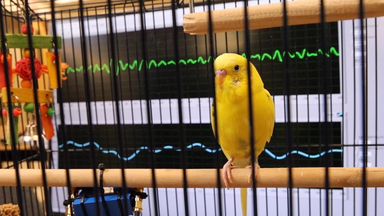 A stress-free way to measure animals' vitals