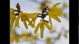 Солнечная капель - Поздравление с Весной!