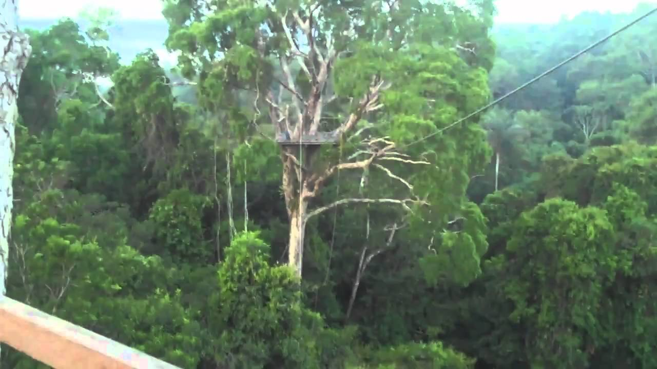 Amazon Jungle Canopy Tour & Amazon Jungle Canopy Tour - YouTube