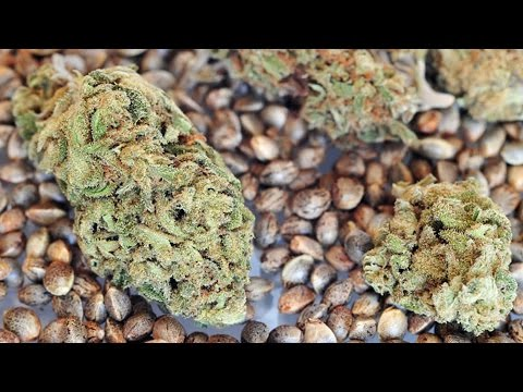 Opus Presents - The 420 Lifestyle: Planting Seed & Growing Weed