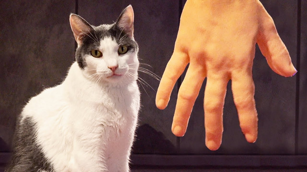 CAT GAMES - Petting Cats With Robot Hand | Fun Entertainment