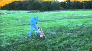 The electric collar and Positive Reinforcement  Lesson 6