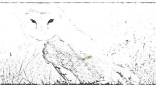 Auto Draw 2: Barn Owl