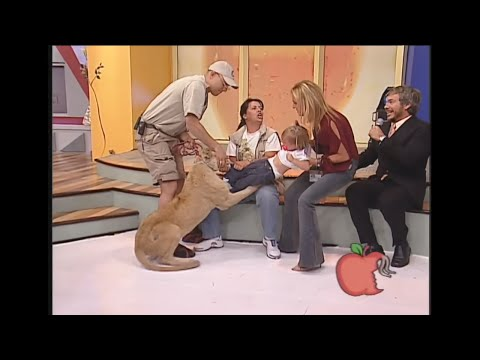 Lion attacks toddler on mexican tv show.