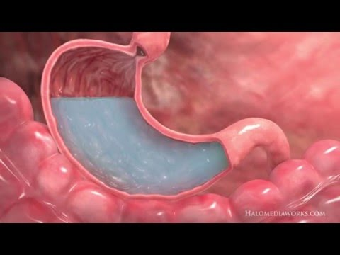 Medical Animation | Interior Stomach
