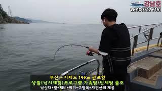 강남호 생활낚시 낚시체험 거제도 바글바글 조황