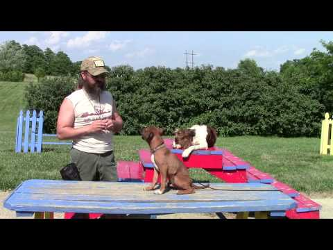 Common Sense Puppy Training Part Two