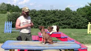 Common Sense Puppy Training Part Two