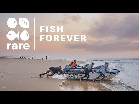Fish Forever: Rare's Community-led Solution To Solve Coastal Overfishing