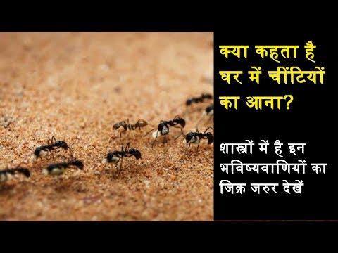 किस बात का संकेत है घर में चींटियों का आना? शास्त्रों में है इन भविष्यवाणियों का जिक्र