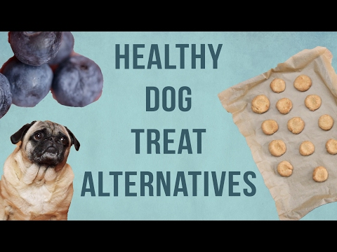 4 Healthy Dog Treat Alternatives
