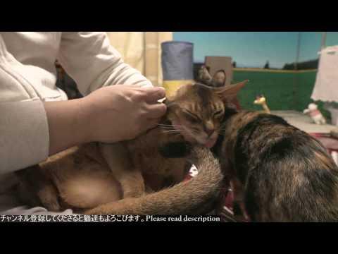 2018.11.8 猫日記   Cat's diary. November 8, 2018 【Miaou みゃう】