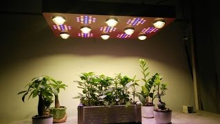wow cree cxb3590 2000w monster led grow light from ecospeed hottest in 2017