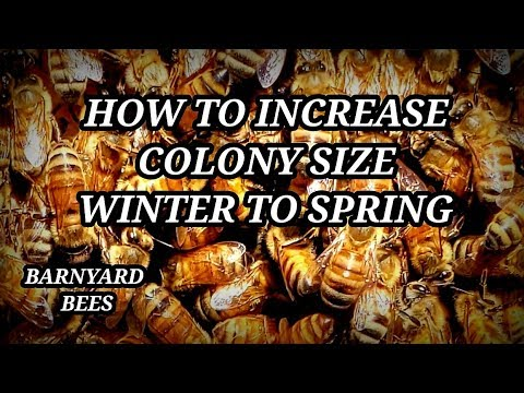 How To Grow Bee Colony Winter To Spring