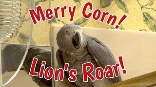 🌲 Merry Corn! 🌽 Lion's Roar! 🦁