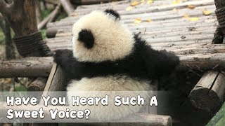 Have You Heard Such A Sweet Voice? | iPanda thumbnail