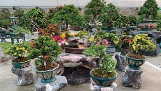 Vườn cây cảnh và hoa trong mơ