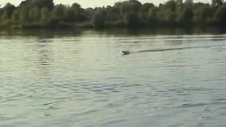 Tiger-Shark, Nitro, 1.Testlauf, Tuningmotor