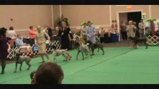 German Shorthaired Pointer Nationals!!! May 2010 - Gainsville Fl