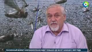 Энтомолог  Тучи саранчи на большие расстояния переносит ветер   МИР24