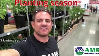 Spring Is Planting Season In Phoenix