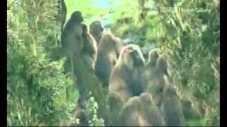 В мире животных Африки...(2)