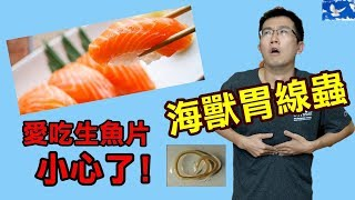 愛吃生魚片 小心這隻「海獸胃線蟲」!| 蒼藍鴿聊醫學EP61