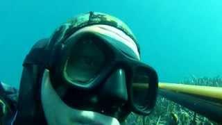 Sığ Su Zıpkın Avları 2 (Sargoz,Levrek,Barracuda) - Shallow Water Spearfishing e2