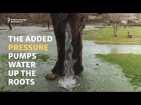 Montenegro's Gushing Water Tree