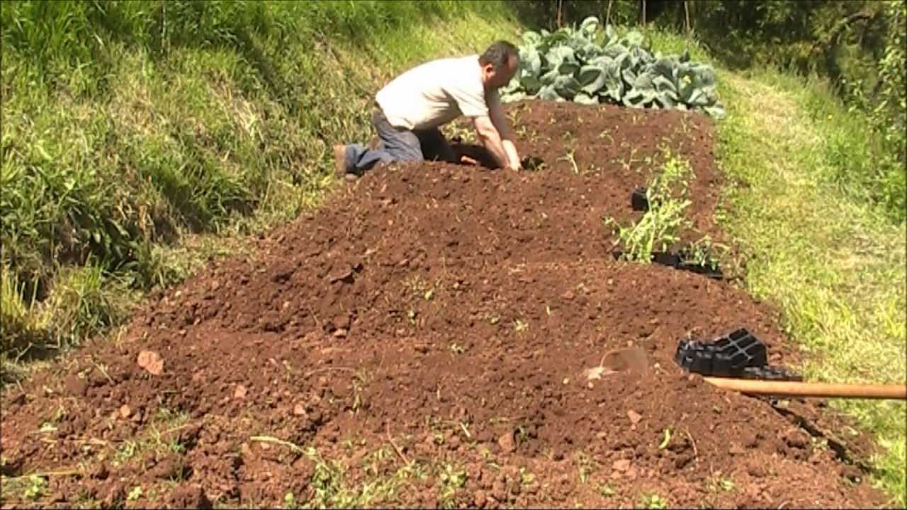 Plantaci n de tomates en el huerto org nico youtube - Que plantar en el huerto ...