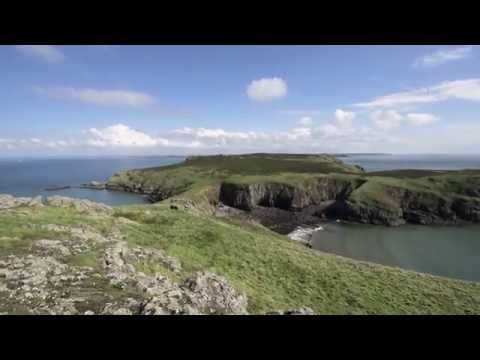 Wildlife on Skomer Island, Pembrokeshire